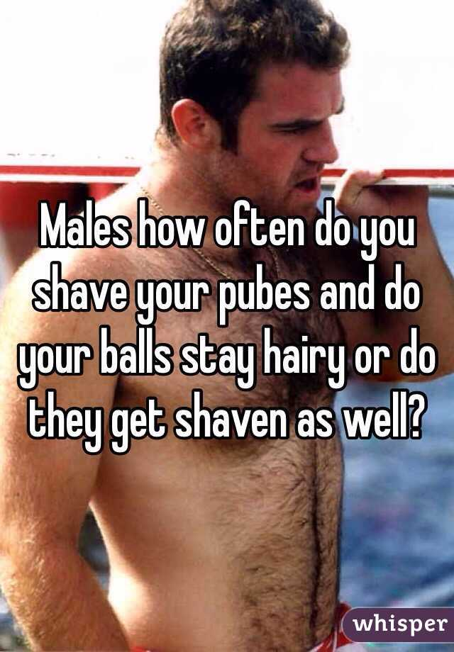 Should i shave my testicles