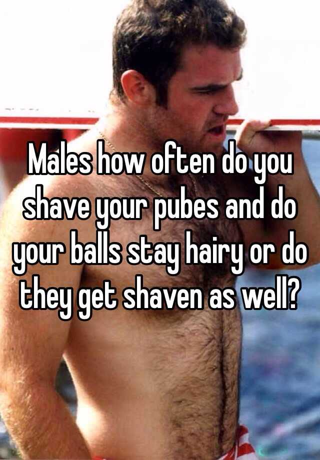 How often to shave balls