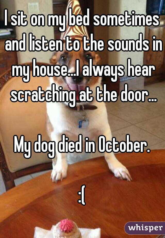 I sit on my bed sometimes and listen to the sounds in my house...I always hear scratching at the door...  My dog died in October.  :(