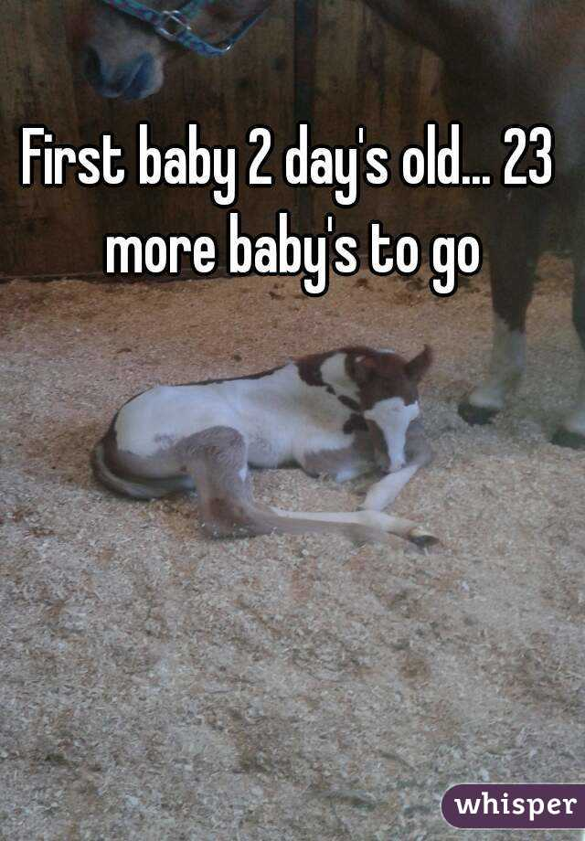 First baby 2 day's old... 23 more baby's to go