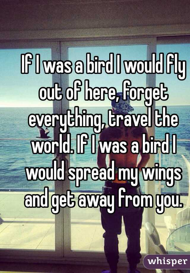 If I was a bird I would fly out of here, forget everything, travel the world. If I was a bird I would spread my wings and get away from you.