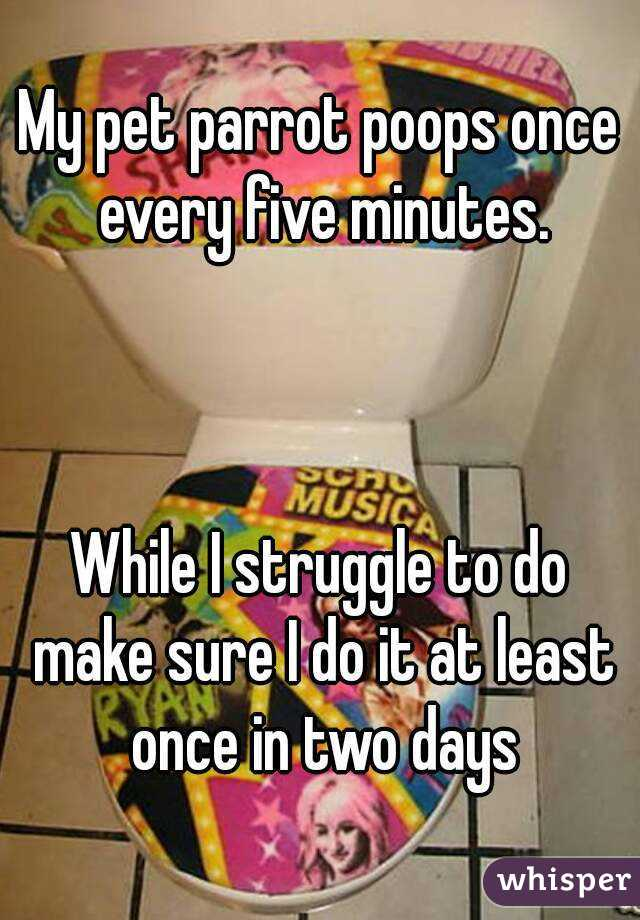 My pet parrot poops once every five minutes.    While I struggle to do make sure I do it at least once in two days
