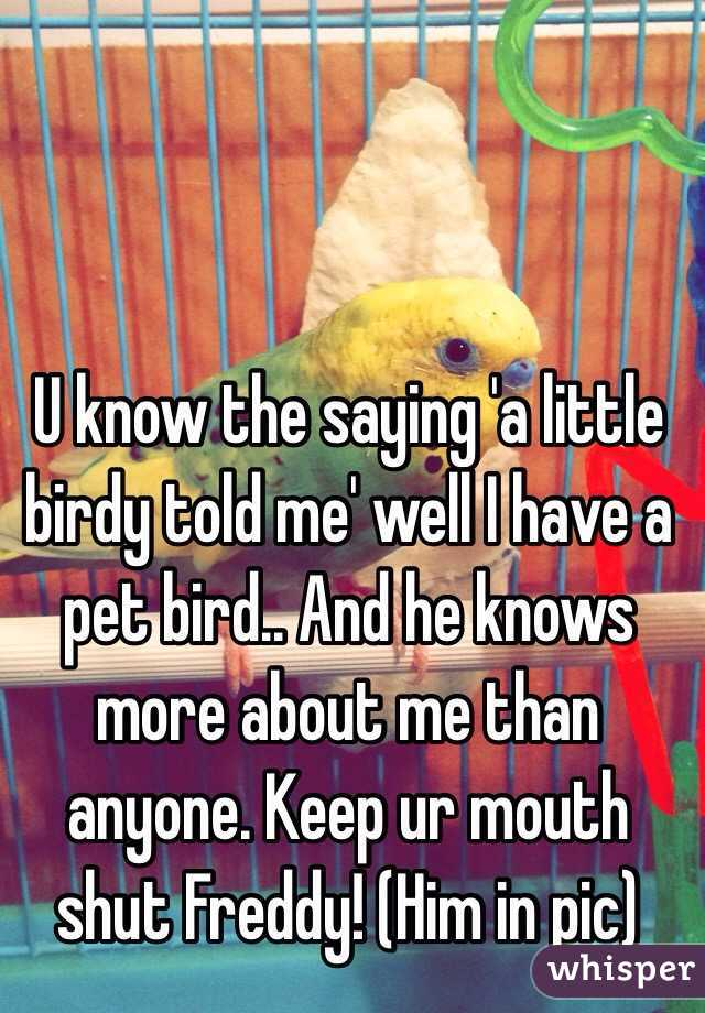 U know the saying 'a little birdy told me' well I have a pet bird.. And he knows more about me than anyone. Keep ur mouth shut Freddy! (Him in pic)