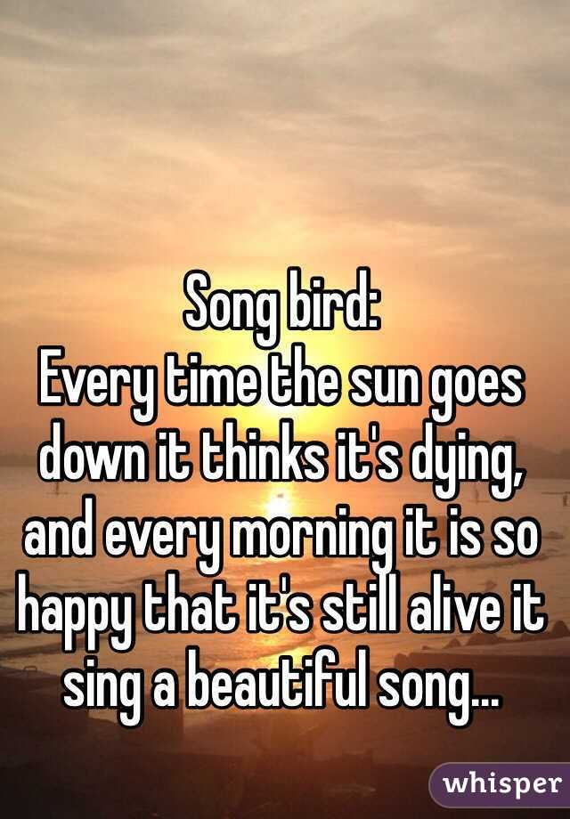 Song bird: Every time the sun goes down it thinks it's dying, and every morning it is so happy that it's still alive it sing a beautiful song...