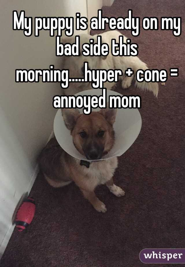 My puppy is already on my bad side this morning.....hyper + cone = annoyed mom