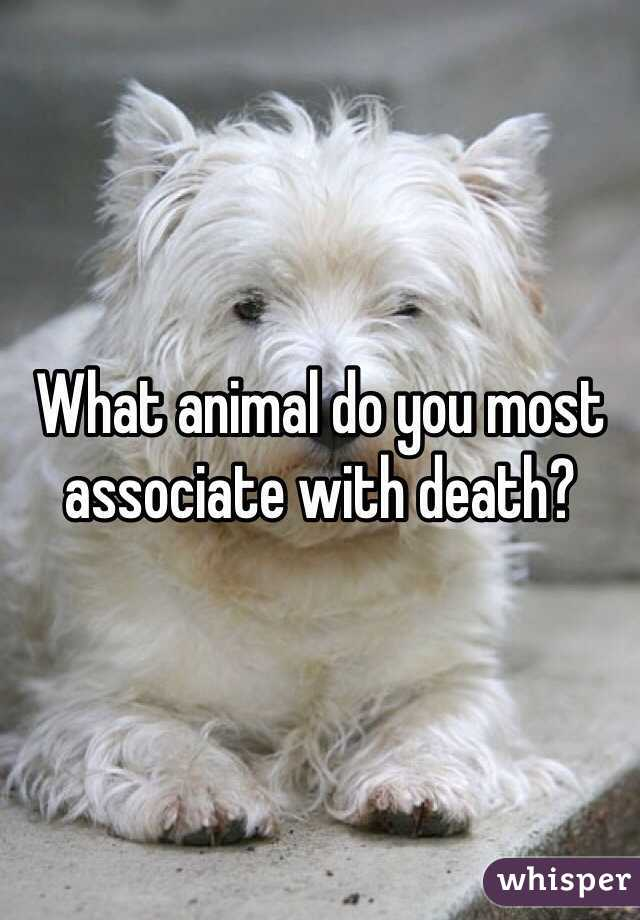 What animal do you most associate with death?
