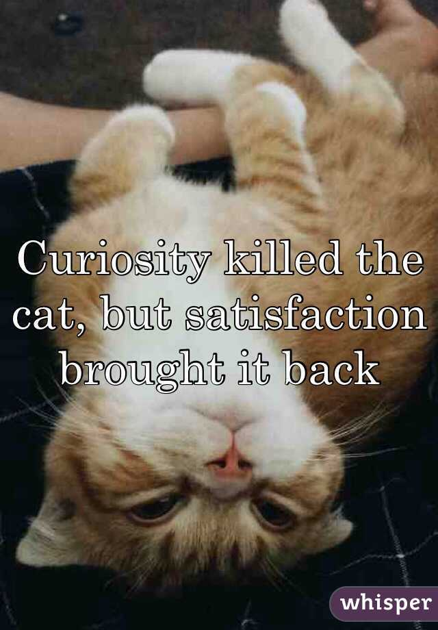 Curiosity killed the cat, but satisfaction brought it back