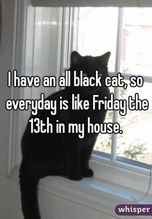 I have an all black cat, so everyday is like Friday the 13th in my house.