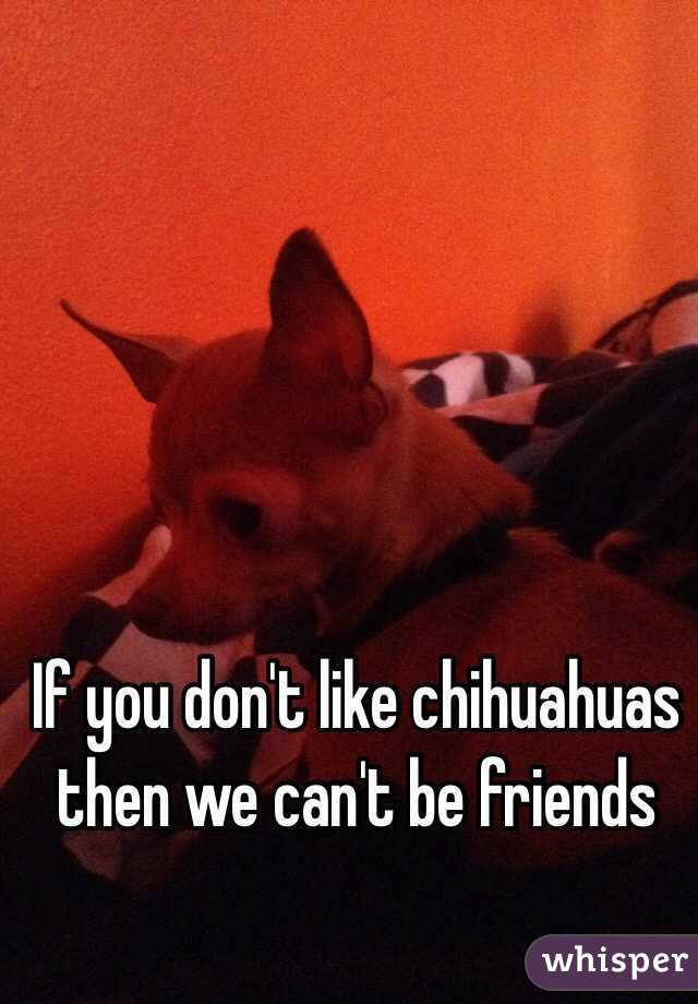 If you don't like chihuahuas then we can't be friends