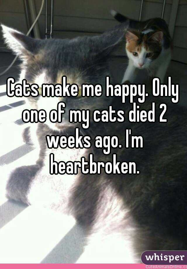 Cats make me happy. Only one of my cats died 2 weeks ago. I'm heartbroken.
