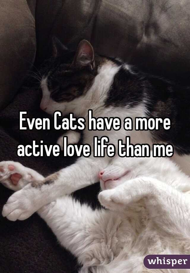 Even Cats have a more active love life than me