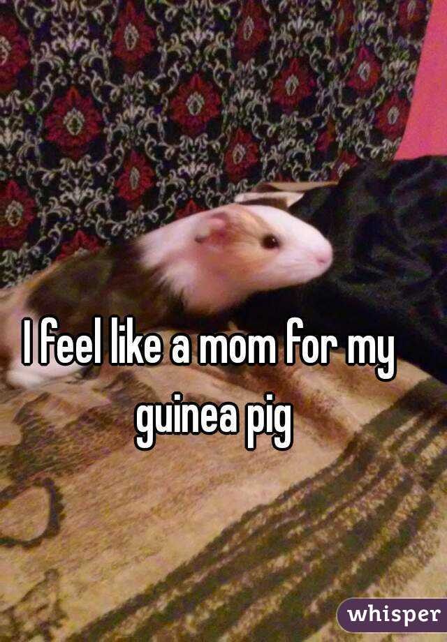 I feel like a mom for my guinea pig
