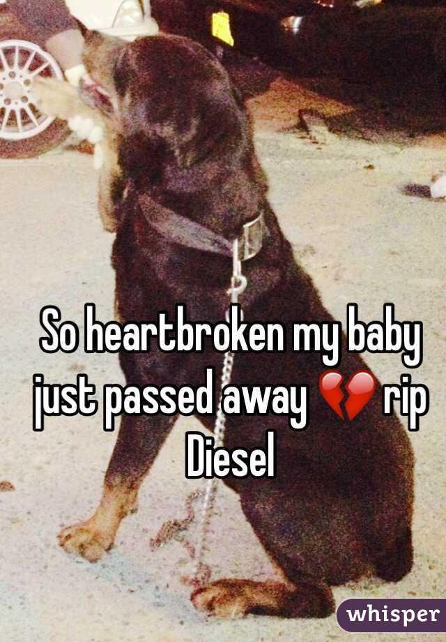 So heartbroken my baby just passed away 💔 rip Diesel