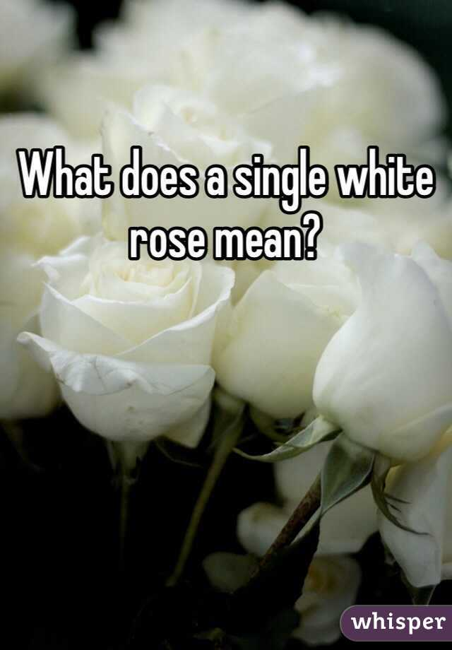 What Does A Single White Rose Mean