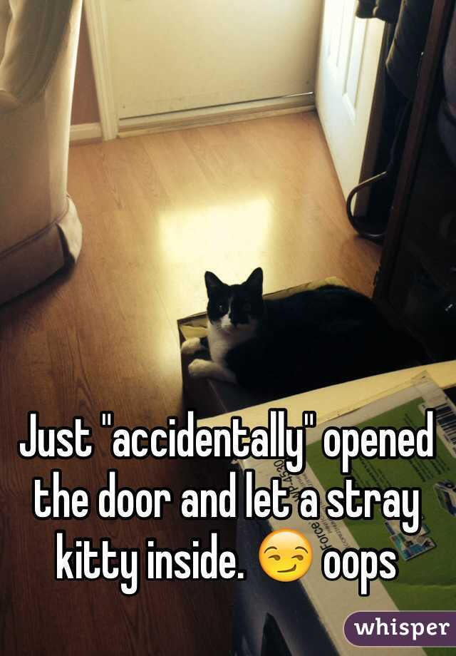 """Just """"accidentally"""" opened the door and let a stray kitty inside. 😏 oops"""