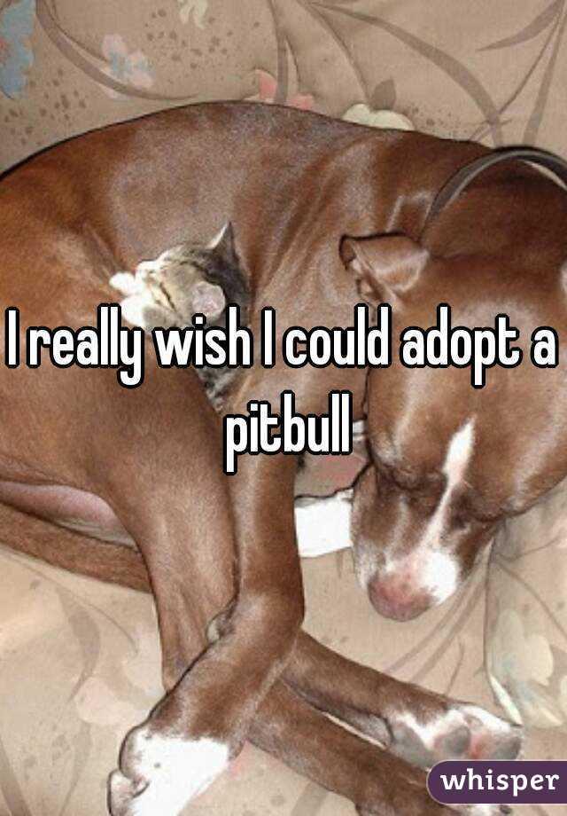 I really wish I could adopt a pitbull