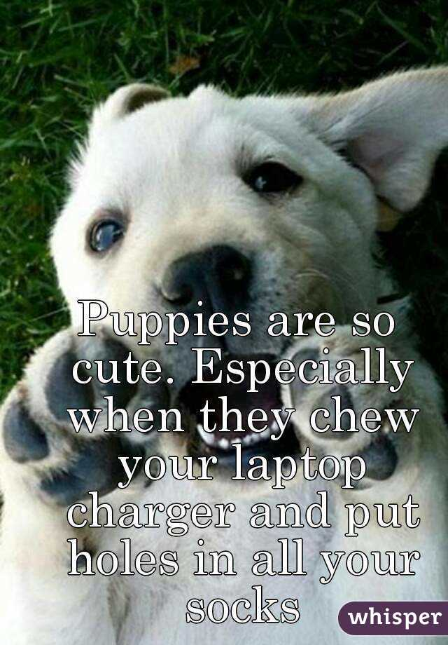 Puppies are so cute. Especially when they chew your laptop charger and put holes in all your socks