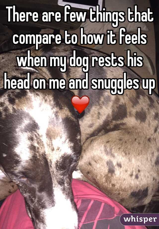 There are few things that compare to how it feels when my dog rests his head on me and snuggles up ❤️