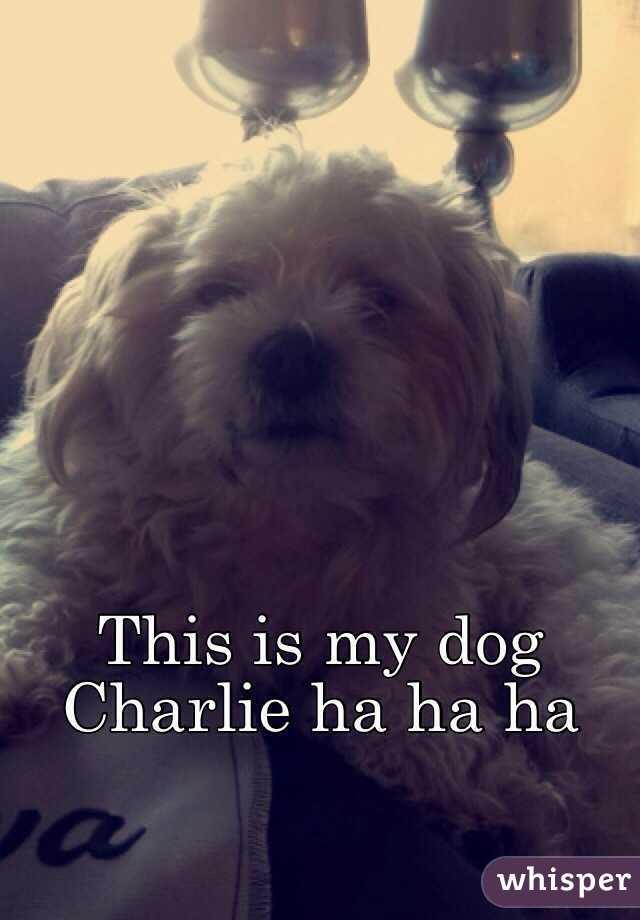 This is my dog Charlie ha ha ha
