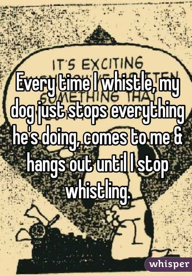 Every time I whistle, my dog just stops everything he's doing, comes to me & hangs out until I stop whistling.