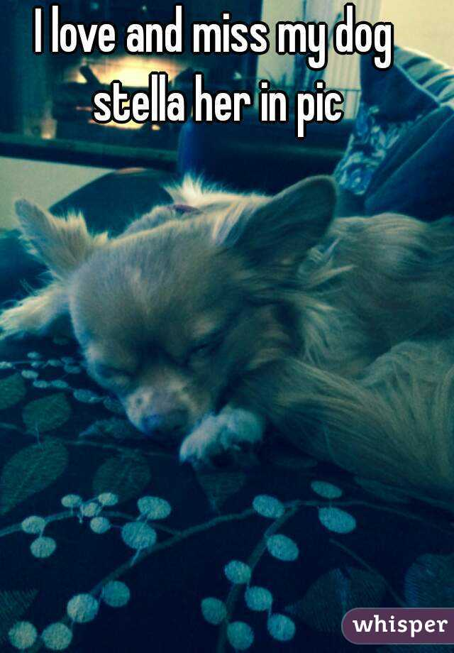I love and miss my dog stella her in pic