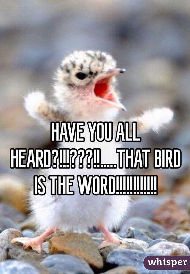 HAVE YOU ALL HEARD?!!!???!!.....THAT BIRD IS THE WORD!!!!!!!!!!!!