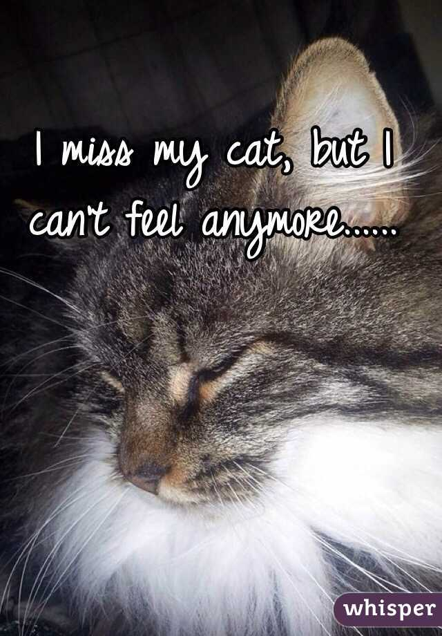 I miss my cat, but I can't feel anymore......
