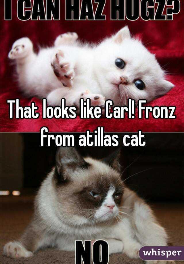 050fc6846571947352527fdfa88982b139f77e wm?v=3 looks like carl! fronz from atillas cat