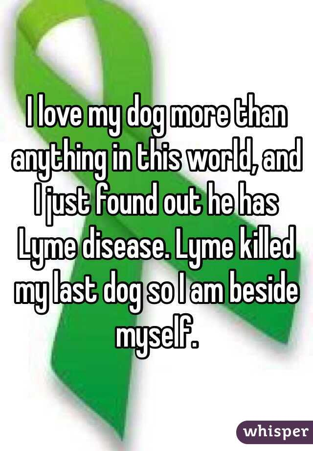 I love my dog more than anything in this world, and I just found out he has Lyme disease. Lyme killed my last dog so I am beside myself.