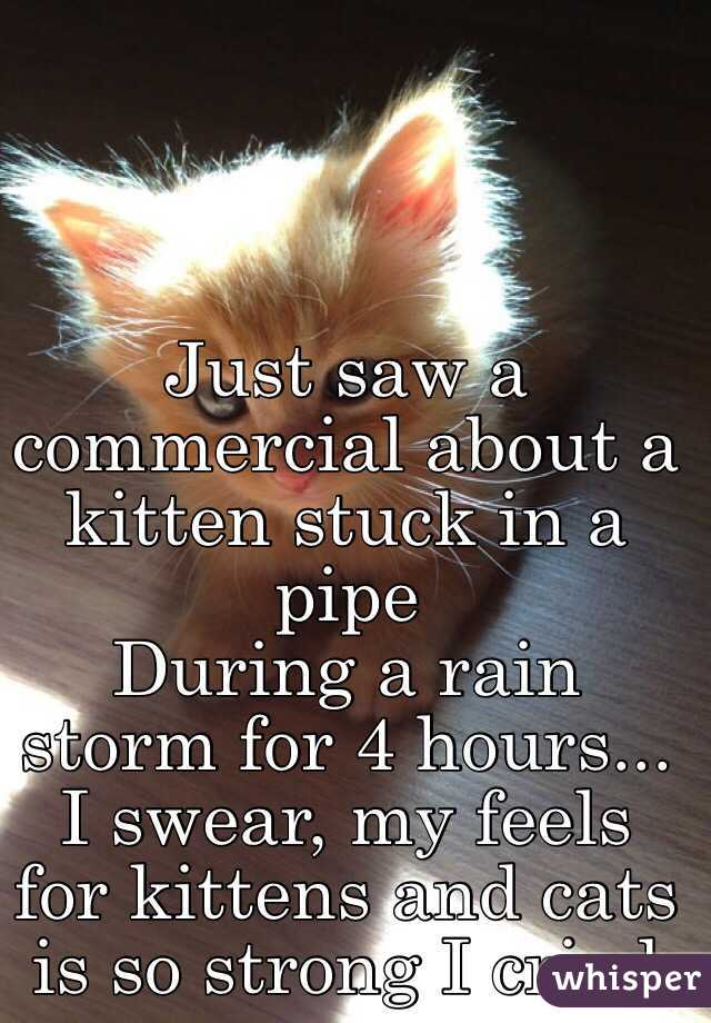 Just saw a commercial about a kitten stuck in a pipe During a rain storm for 4 hours... I swear, my feels for kittens and cats is so strong I cried