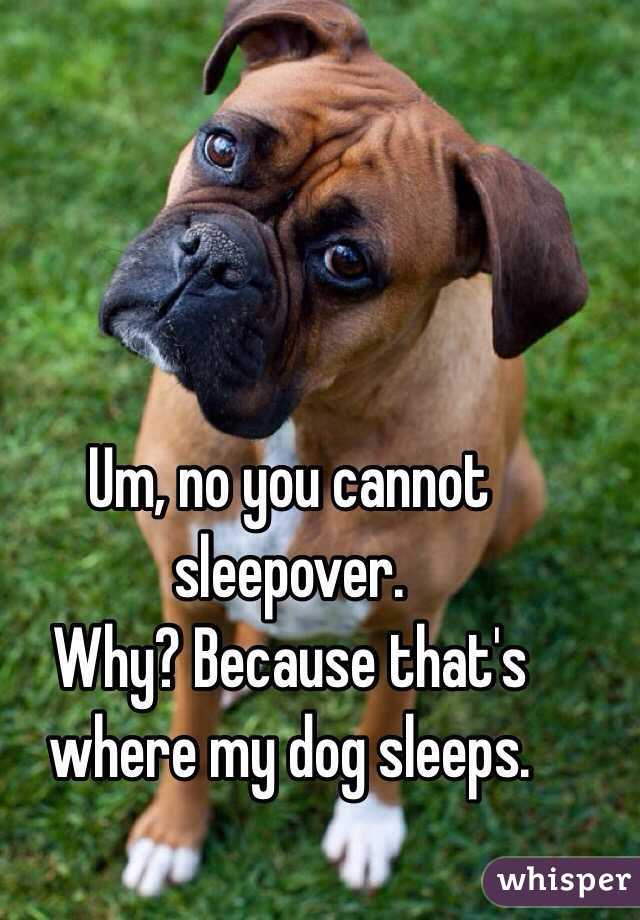 Um, no you cannot sleepover.  Why? Because that's where my dog sleeps.