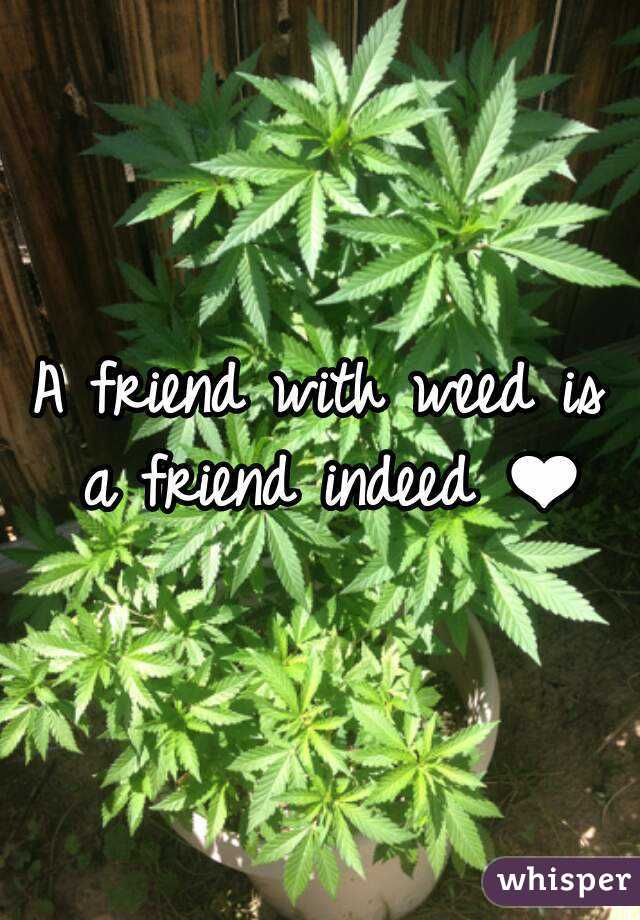 A friend with weed is a friend indeed ❤
