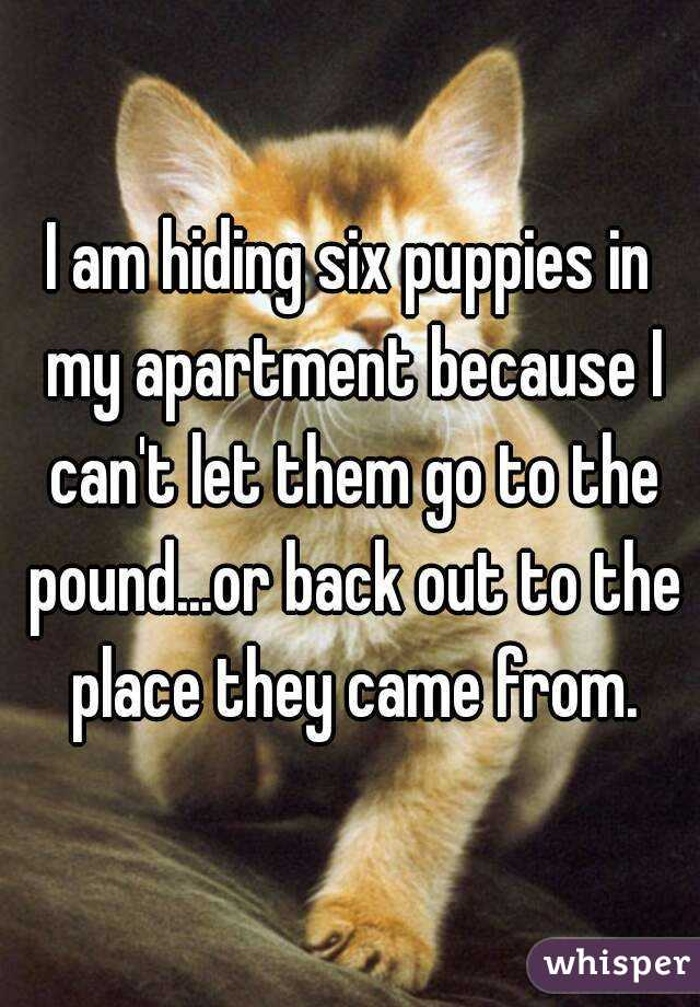 I am hiding six puppies in my apartment because I can't let them go to the pound...or back out to the place they came from.