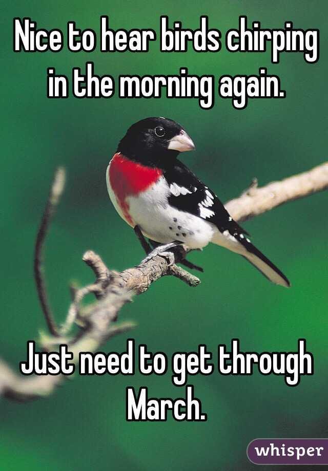 Nice to hear birds chirping in the morning again  Just need