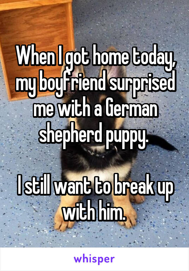 When I got home today, my boyfriend surprised me with a German shepherd puppy.   I still want to break up with him.