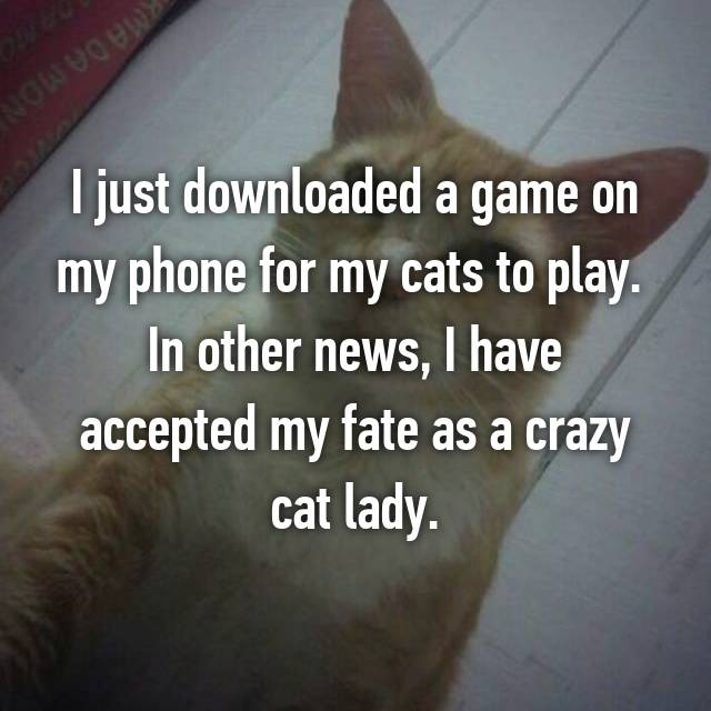 I just downloaded a game on my phone for my cats to play.  In other news, I have accepted my fate as a crazy cat lady.