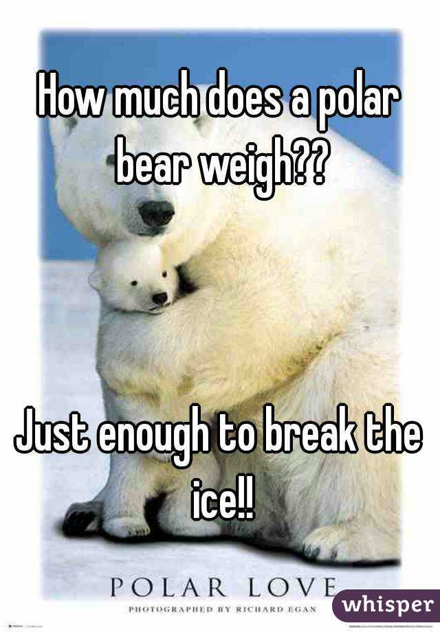 How much does a polar bear weigh
