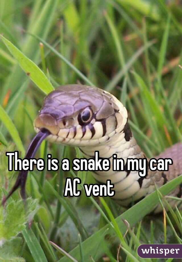 There is a snake in my car AC vent