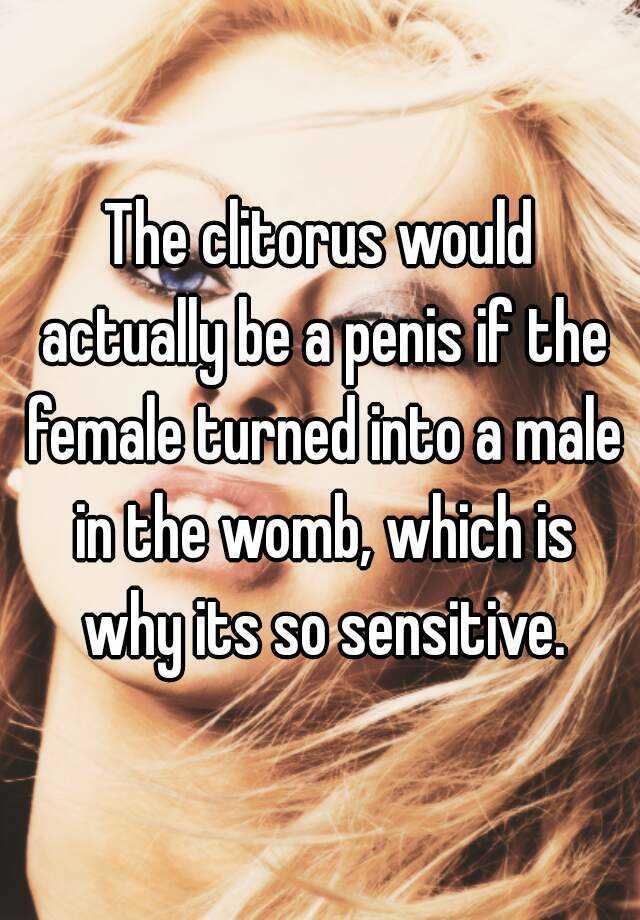 the female penis