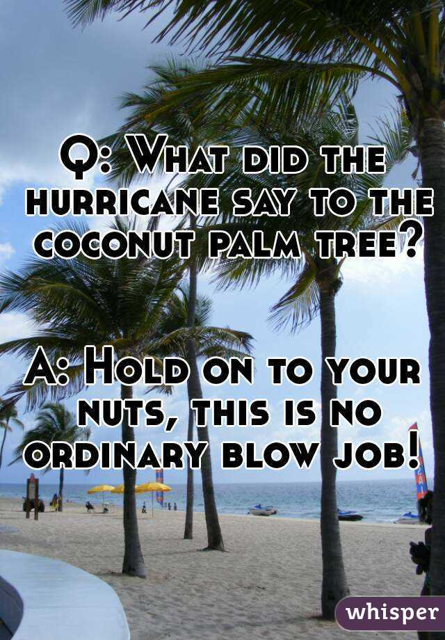 What did the hurricane say to the coconut palm tree
