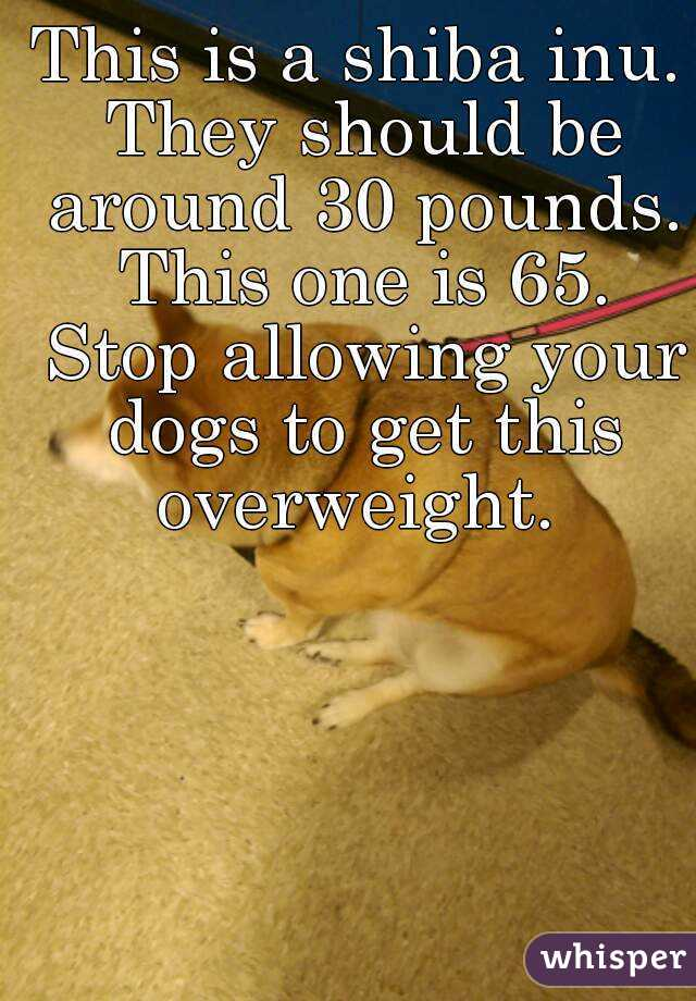 This is a shiba inu. They should be around 30 pounds. This one is 65. Stop allowing your dogs to get this overweight.