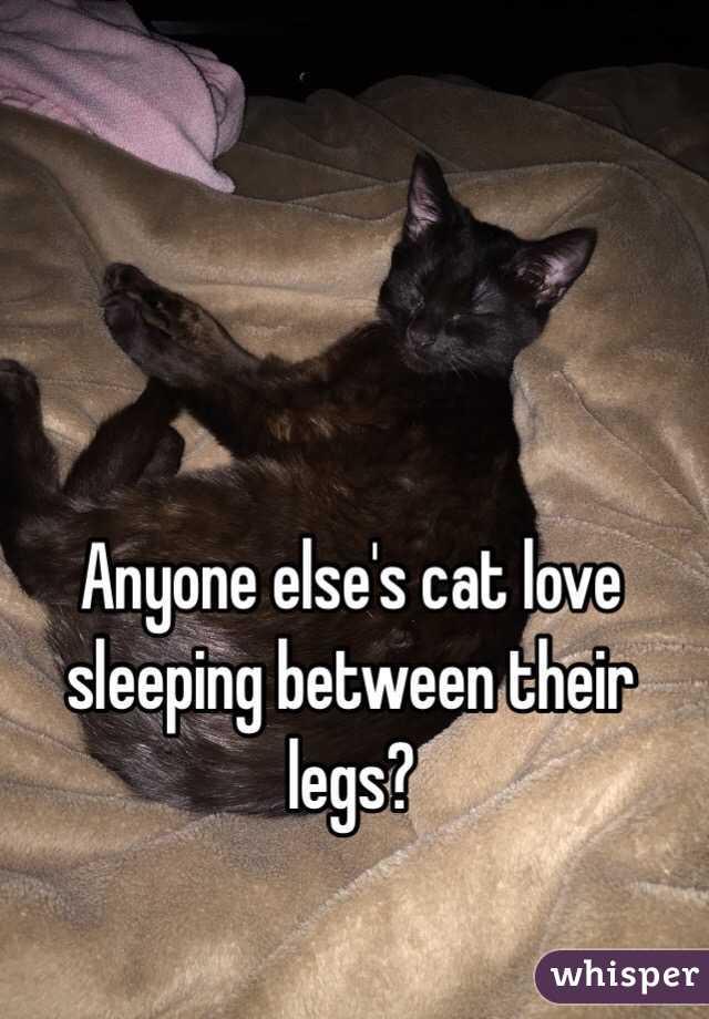 Anyone else's cat love sleeping between their legs?