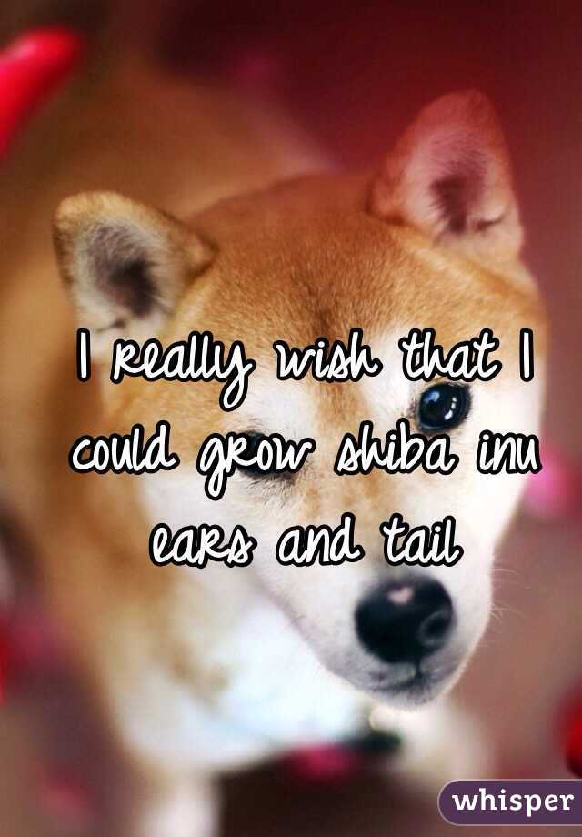 I really wish that I could grow shiba inu ears and tail