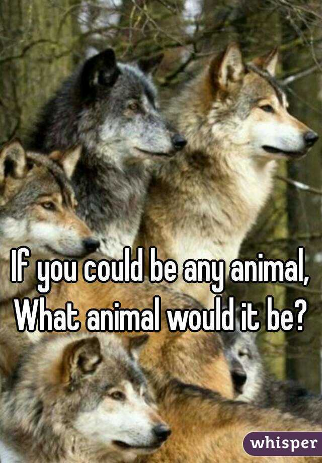 If you could be any animal, What animal would it be?
