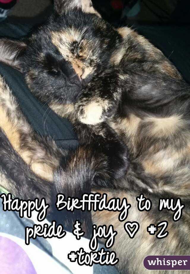 Happy Birfffday to my pride & joy ♡ #2 #tortie