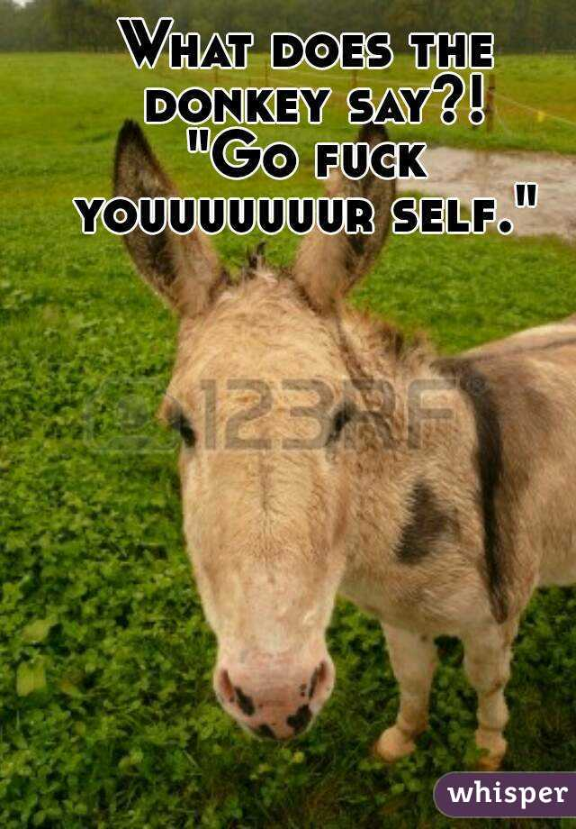 """What does the donkey say?! """"Go fuck youuuuuuur self."""""""