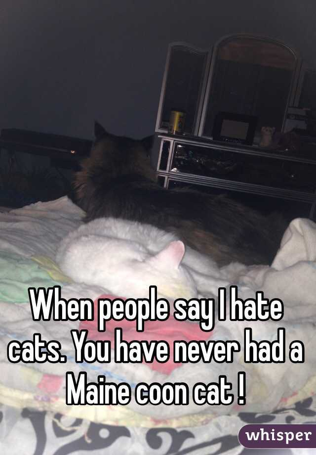 When people say I hate cats. You have never had a Maine coon cat !