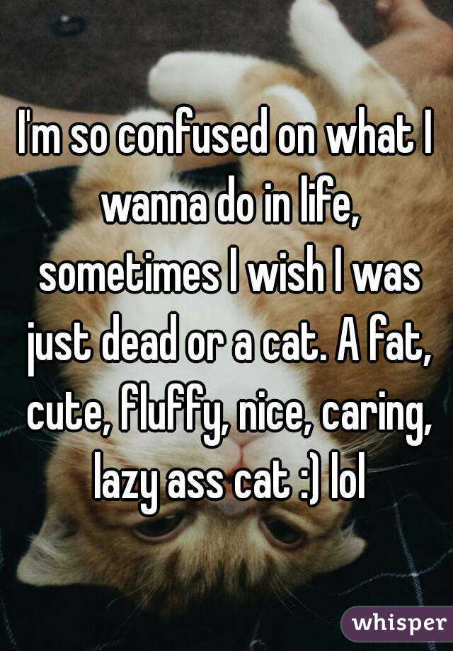 I'm so confused on what I wanna do in life, sometimes I wish I was just dead or a cat. A fat, cute, fluffy, nice, caring, lazy ass cat :) lol