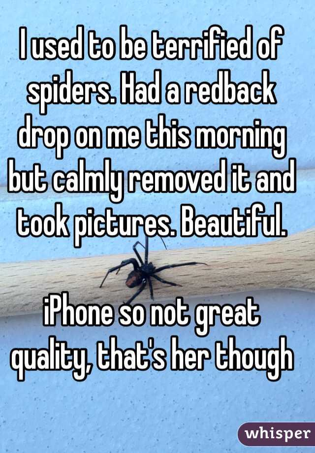 I used to be terrified of spiders. Had a redback drop on me this morning but calmly removed it and took pictures. Beautiful.  iPhone so not great quality, that's her though