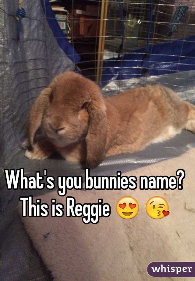 What's you bunnies name? This is Reggie 😍 😘